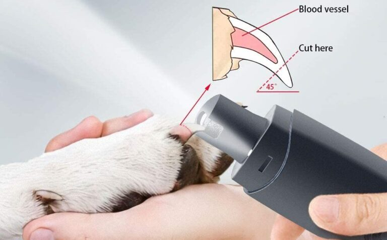 3 Best Electric Dog Nail Trimmer 2021